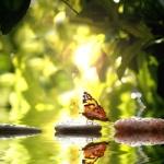 papillon de l'âme